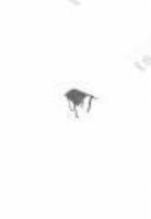 Дымоход Зонтик NAPOLEON под UNI FINAL для дымохода Schiedel Uni диаметр 140мм